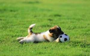 怎么给狗狗制定训练计划?前期给狗狗训练计划准备